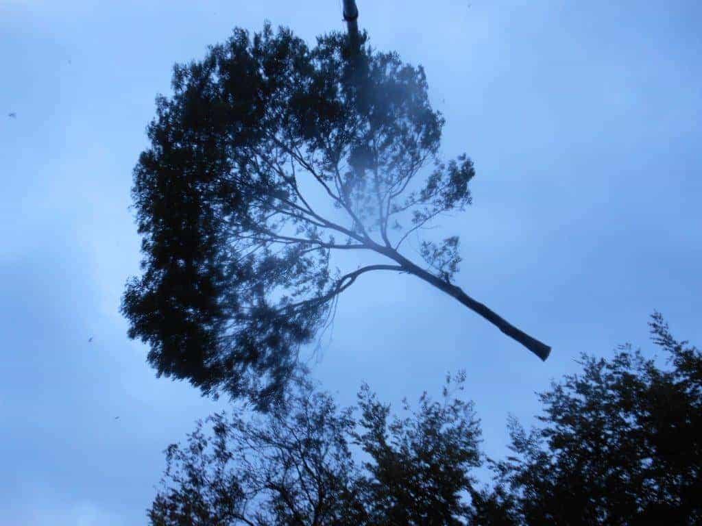 Citaten Over Bomen : A van spelde hoveniers bomen rooien hoornaar