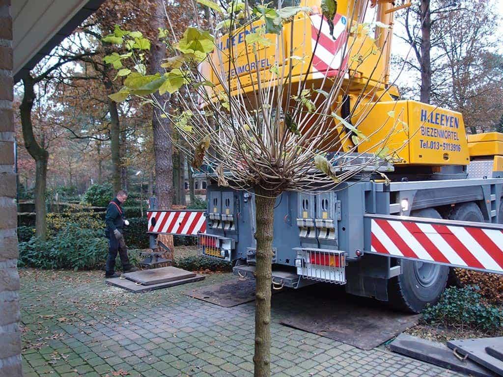 A van Spelde Hoveniers: bomen rooien en kappen in Gilze Rijen