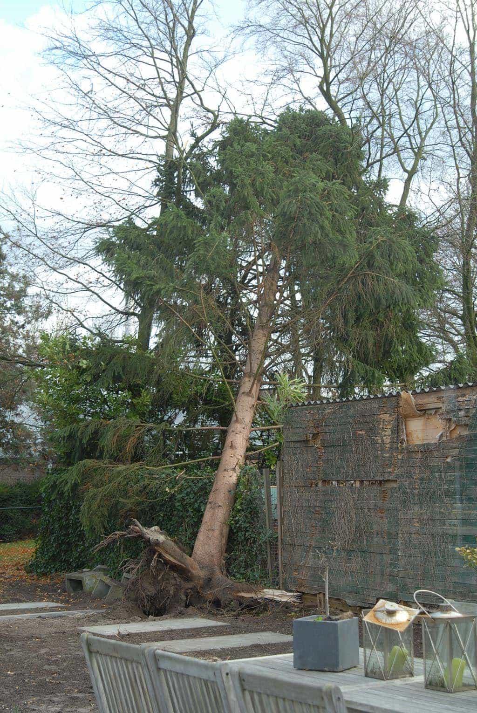 A Van Spelde Hoveniers Ruimen Van Bomen Na Een Storm