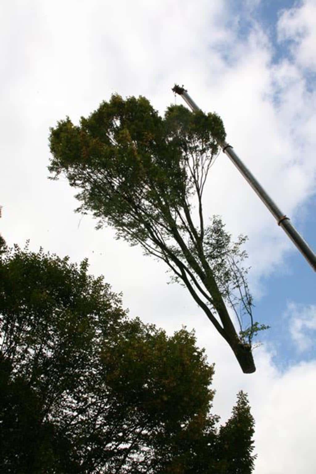 A van spelde hoveniers bomen rooien oostburg for Hoeveel kost zwemvijver