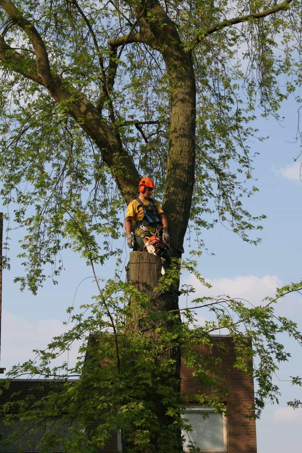 Bomen kappen hovenier kosten