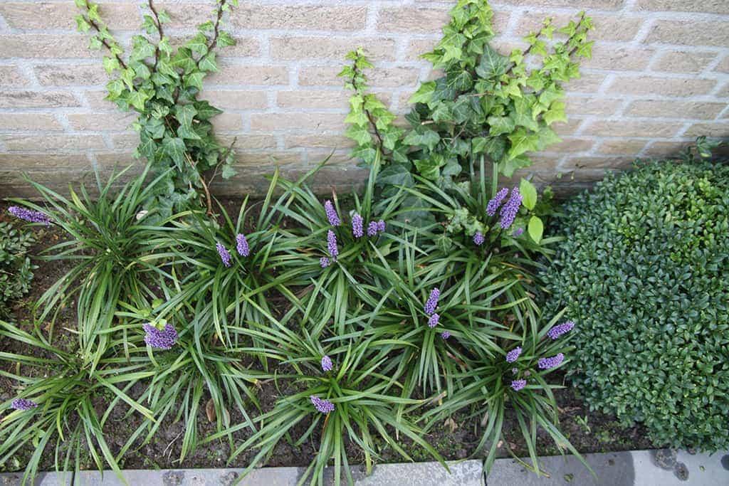 A van spelde hoveniers knusse stadstuin modern met watermuur for Tuin inrichten planten